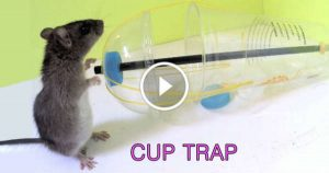 DIY Rat Trap water bottle mouse easy tutorial 1